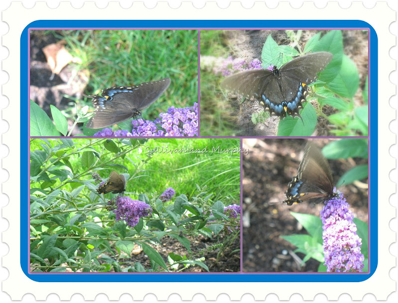butterfly bush collage 2