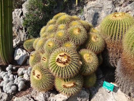 12. Cactusi.JPG