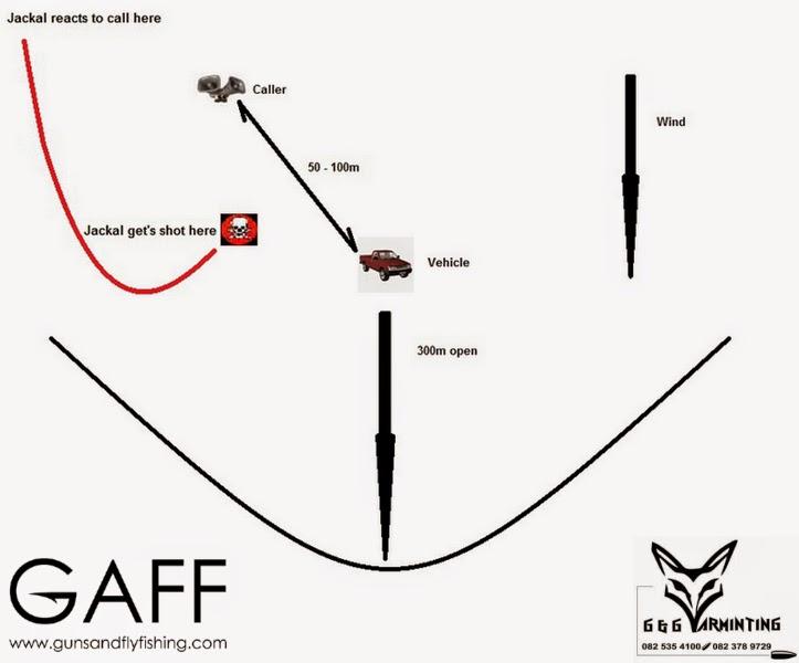 Jaracal-Caracal-Hunting (8).jpg