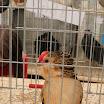 Poultry 06.jpg