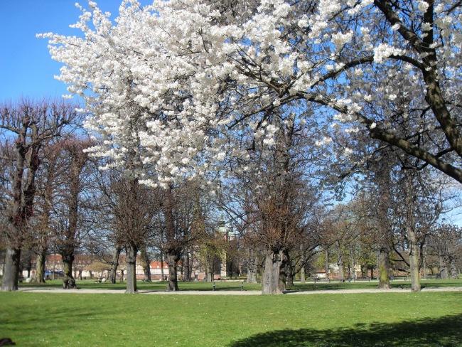 Rosenborg i forårsstemning