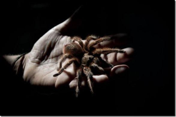 spider-farmer-juan-7