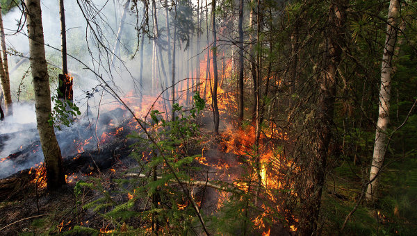 A fire burns through a forest in Siberia, 23 August 2012. Yakov Andreev / RIA Novosti