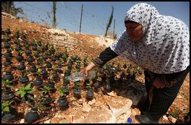 Dai lacrimogeni nascono fiori.. (8)