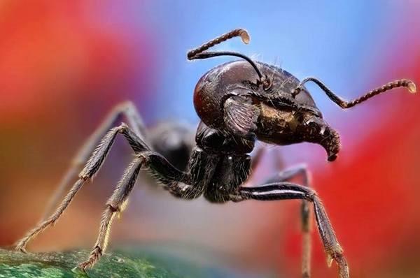 Macrofotografia mostra pequenos monstros vivendo entres 15