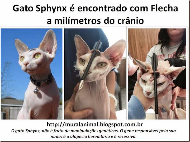 Gato Sphynx é encontrado com Flecha