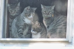 stray kitties in the window 10.18.13