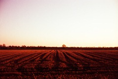 Stubble-at-Sunset---XPRO