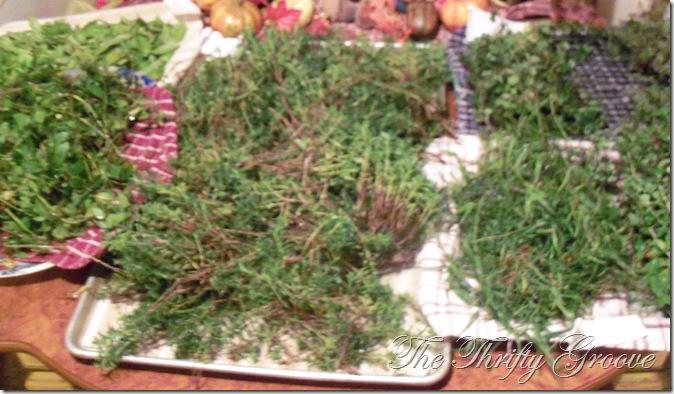 Fall harvesting 2011 001