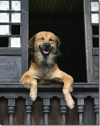 fotos gradiosas de perros capitanpalomo (3)