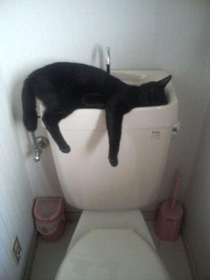 gatos durmiendo (10)