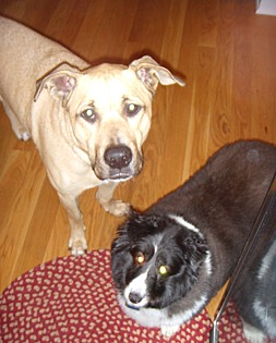 Jake and Maggie, mixed breeds from New Albany, Ohio. These rescues are best buds! According to Jake,