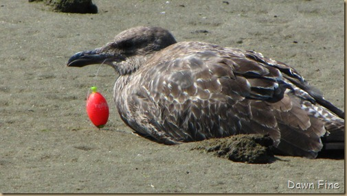 Birding Clamming_025