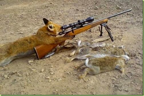 fox.fight backjpg