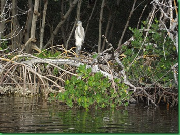 E.G. Simmona Ruskin, FL Site #65 040