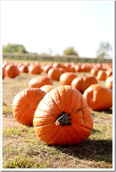 pumpkin patch IMG_9751