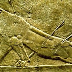 22.- Palacio de Nínive, Leona herida