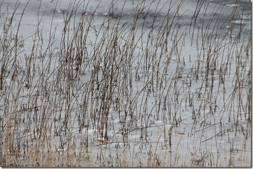 27-abstract-reeds