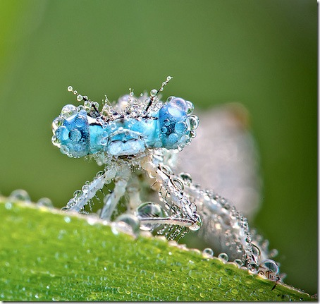 fotografii insecte
