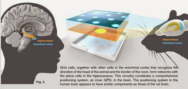Place cells and Grid cells in Brain