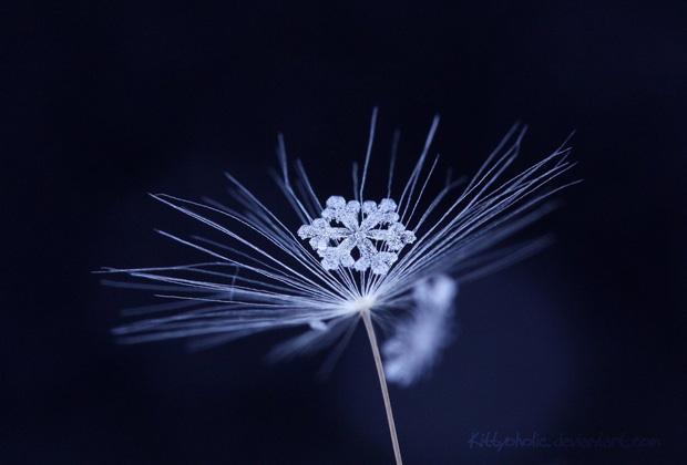 macro-photography-27.jpg