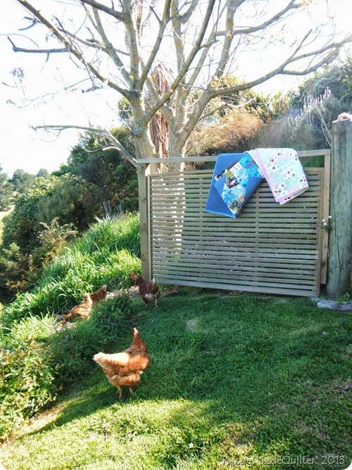 Brown Shaver Chooks