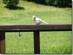 White bird 011