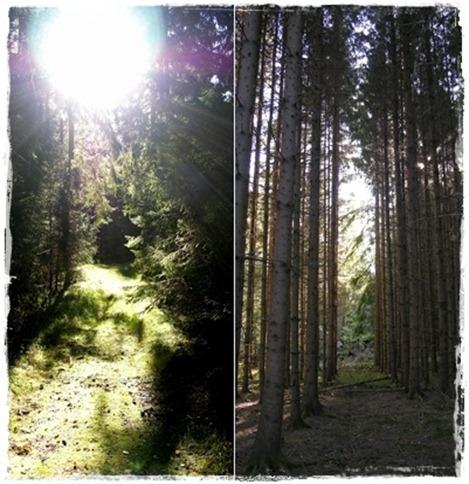 2 skogen