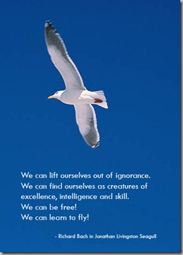 seagull4_out_of_ignorance
