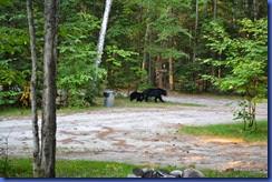 Bears 2011-07-20 002