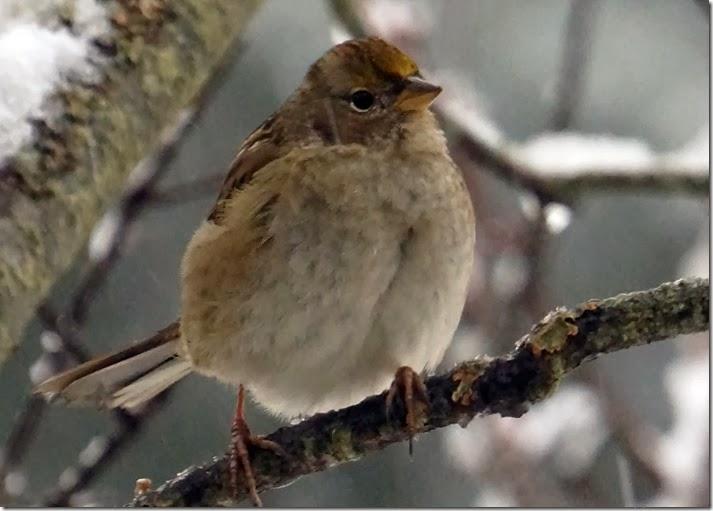lopez sparrow 122013 00000