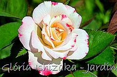 16  - Glória Ishizaka - Rosas do Jardim Botânico Nagai - Osaka