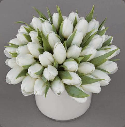 tulips whitetulupssmall bloom by Anuschka