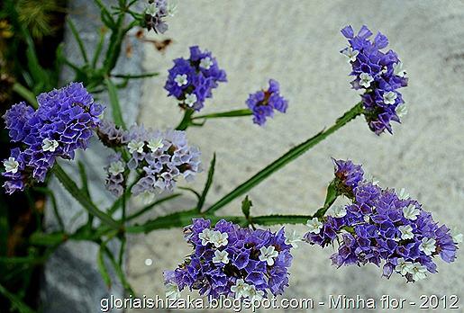 Glória Ishizaka - minhas flores - 2012 - 20