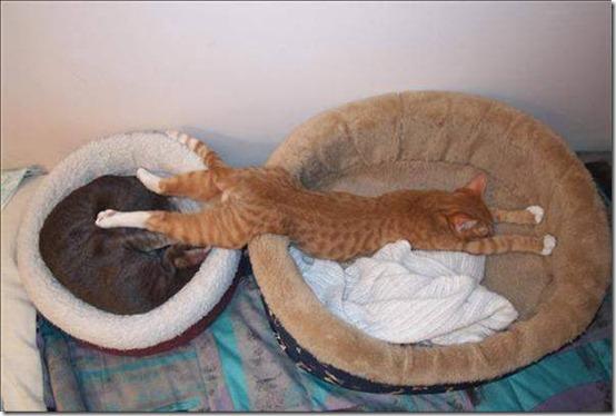 gato-durmiendo 5