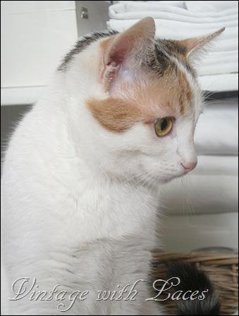 White Kitty Dottie