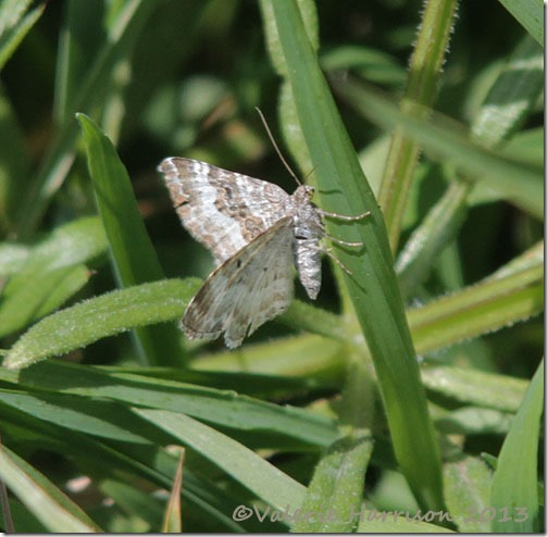39-common-carpet