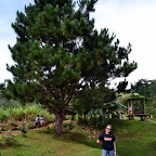 Wifey posing in front of a huge tree in Agong House area at Kapatagan