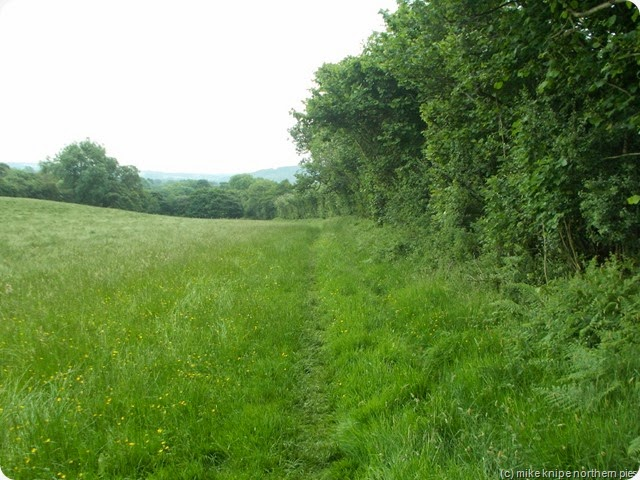 wolsingham meadows