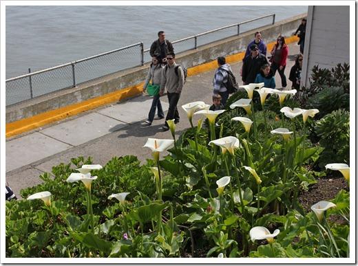 120408_Alcatraz_52