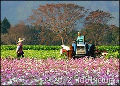 pertanian di Jepang