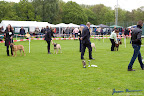 20100513-Bullmastiff-Clubmatch_30947.jpg