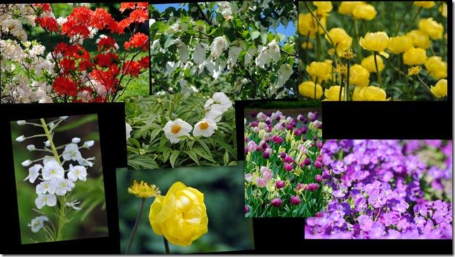 2011-05-29 Botanisk have 20111