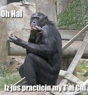 Monkey T'ai Chi
