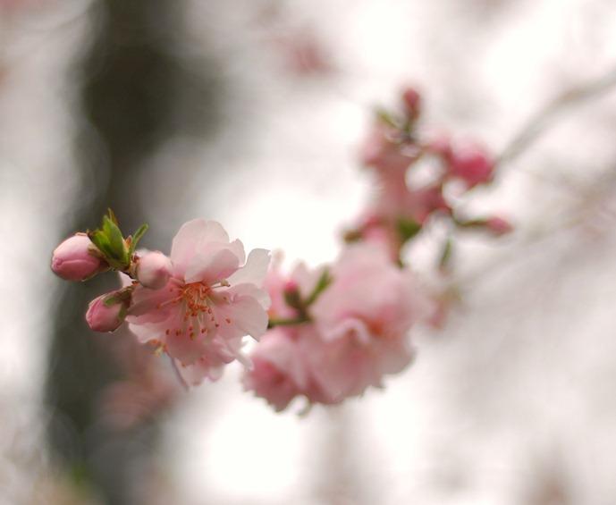 Fleur22