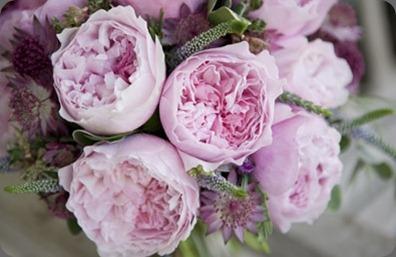 rosalind235