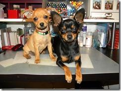 Bently & Rocky