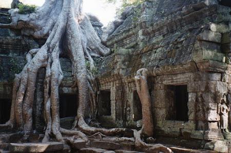 Imagini Cambogia: arborii Angkor Wat