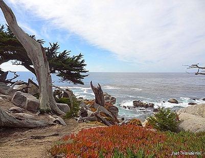 _Monterey23_thumb[4]