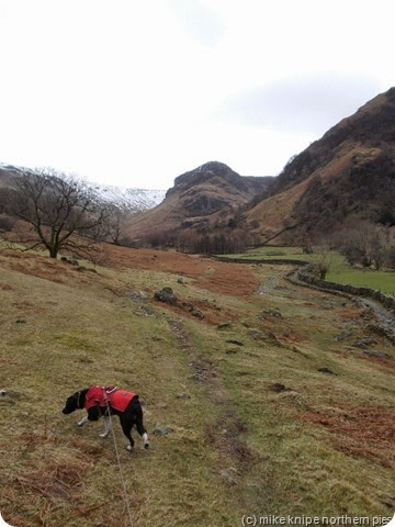 eagle crag and dog